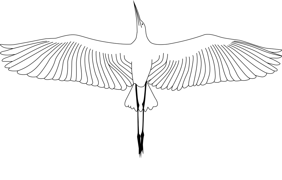 Third Wing Photo and Video Productions